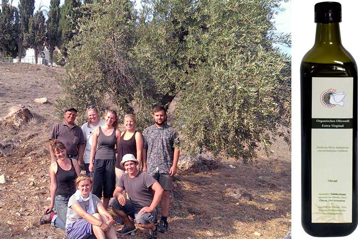 Talitha Kumi Olivenöl vom Ölberg