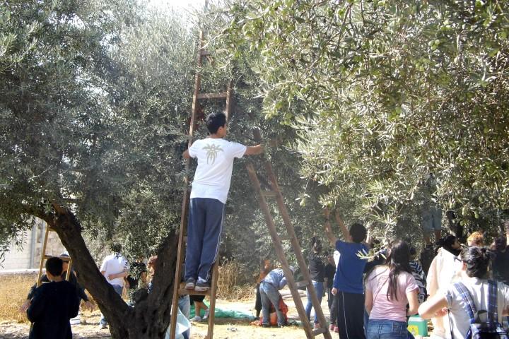 Helfen im Olivenhain: Reise für 2021 geplant